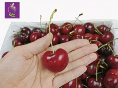 Cherry Number One Newzealand